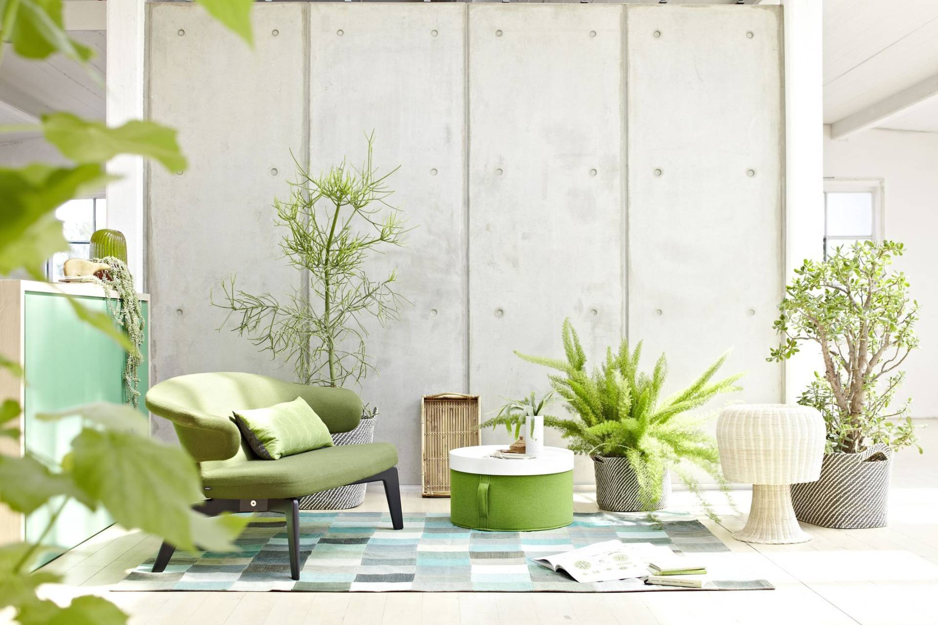 Комнатные растения в интерьере дома / квартиры